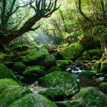 屋久島 想像以上に美しい、世界遺産の島